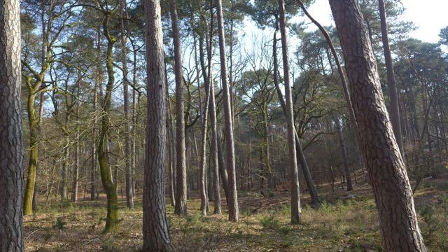 Floresta Fontainebleau3