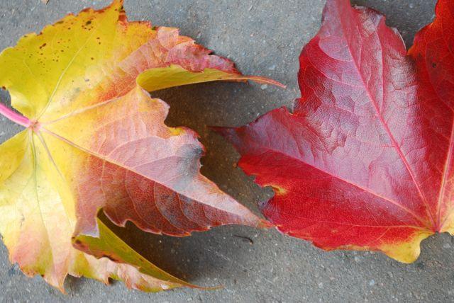 outono 3