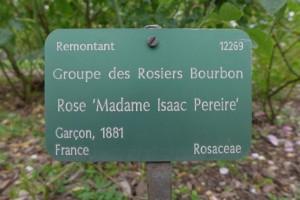 Rosas Jardin des Plantes 3