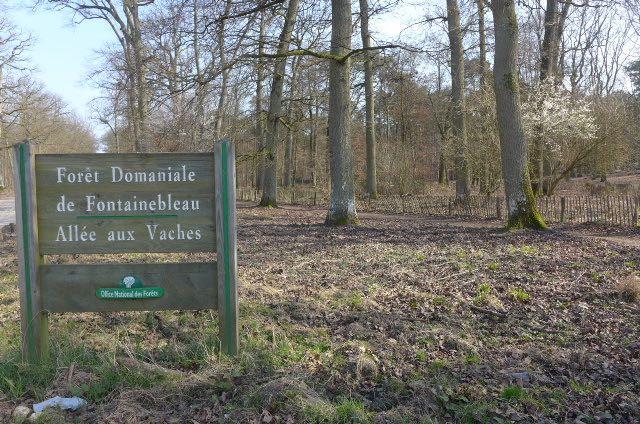 Floresta Fontainebleau 4