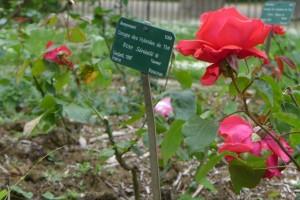 Jardim das Rosas_Jardin des Plantes 17