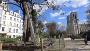 Arvore mais antiga de Paris_Paris_abr 2016 _ A Viagem Certa_Claudia Gazel_Dicas de Paris - 2