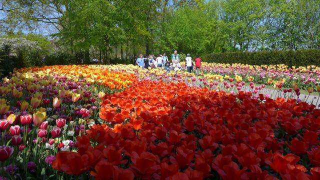 Jardim de tulipas na Holanda_Keukenhof_A Ciagem Certa_dicas da holanda - 9 (1)