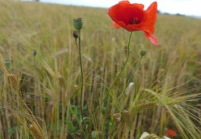 Ile-de-Re_Abbaye-flores