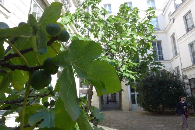 Passage Dauphine_A Viagem Certa_dicas de Paris1