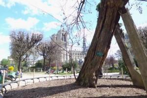 Arvore mais antiga de Paris_Paris_abr 2016 _ A Viagem Certa_Claudia Gazel_Dicas de Paris - 1