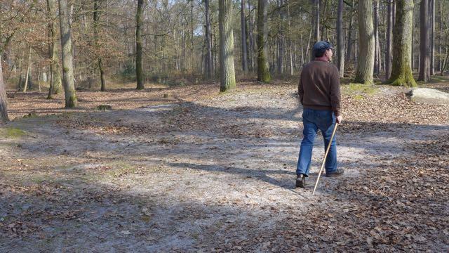 Floresta Fontainebleau1