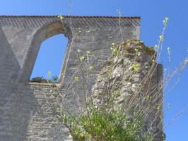 Ile-de-Re_Abbaye-4