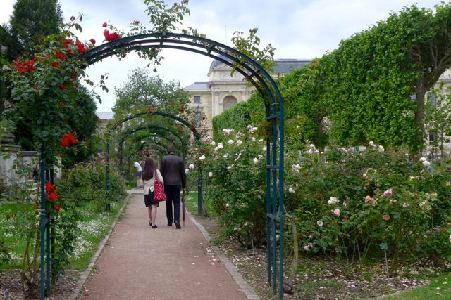 Jardim de Rossas_Jardin des Plantes 3