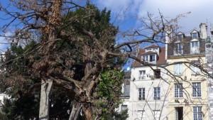 Arvore mais antiga de Paris_Paris_abr 2016 _ A Viagem Certa_Claudia Gazel_Dicas de Paris - 7