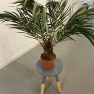 Plant 009