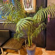 Plant 011