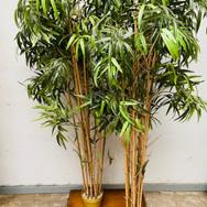 Plant 012