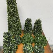 Plant 006