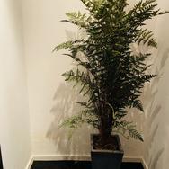 Plant 003