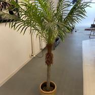 Plant 010