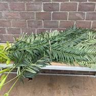 Plant 013