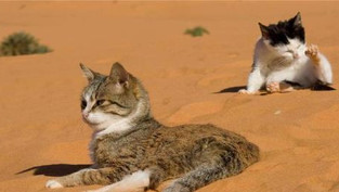 5 Mačjih viceva no.1