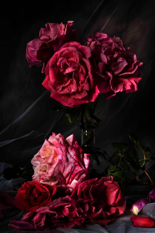 SANDRA PLATAS HERNÁNDEZ - Roses