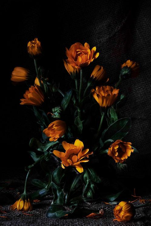 SANDRA PLATAS HERNÁNDEZ - Flores de mi jardín