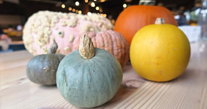 Local Squash varieties from Oregon