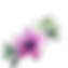 Anemone_pink_png.png