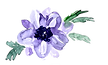 anemone_png.png