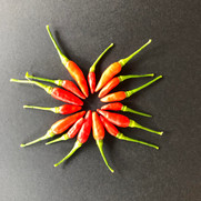 Red Hot Chilli Peppers.jpg