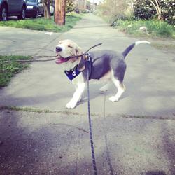 Dog Walk Seattle