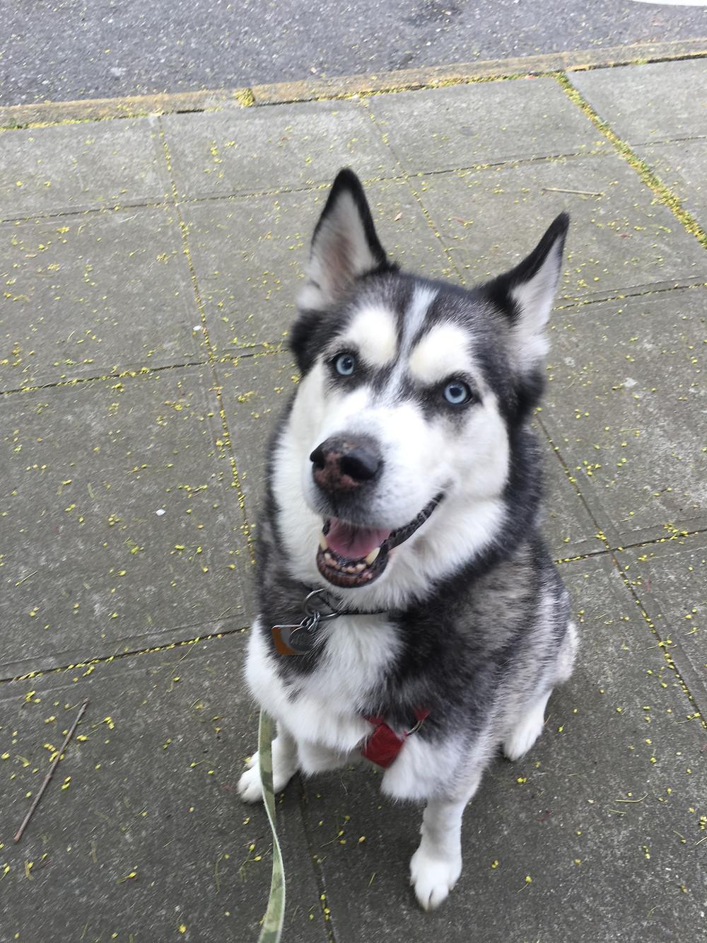Walk With Tanya Dog Walking Services