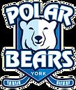 York Polar Bears 2017 copy.PNG