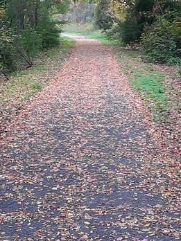 trail in fall.jpg