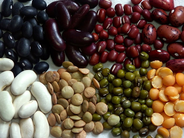 embedded_Different_Types_of_Beans.jpg