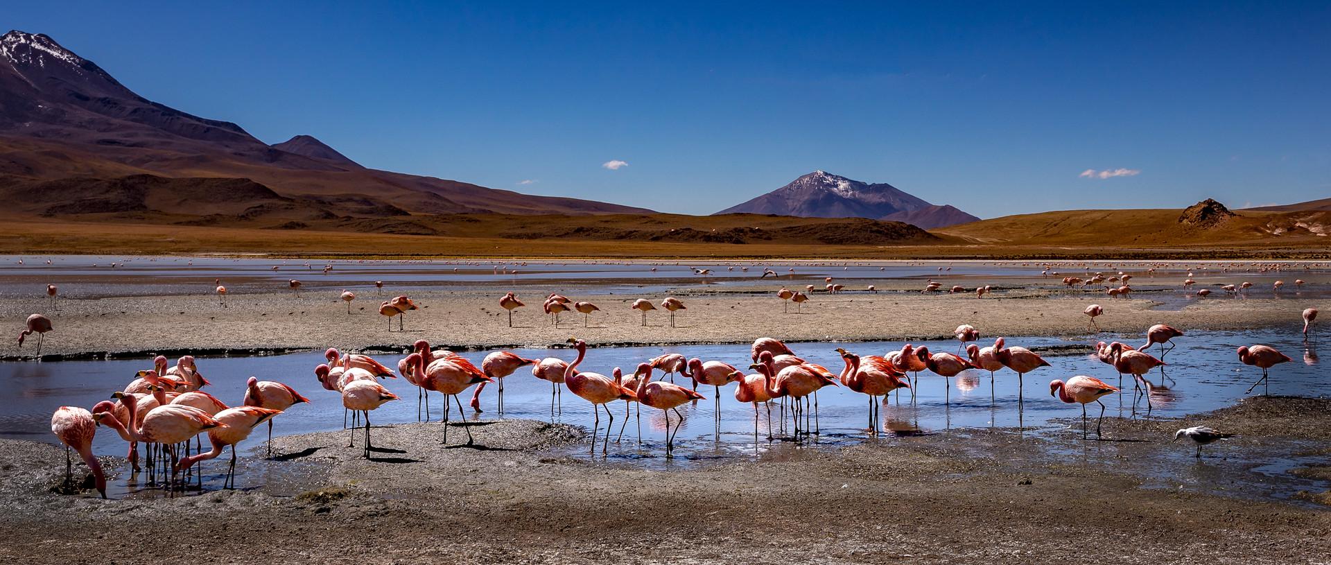 flamingo's nieuw-50-2.jpg