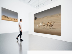 untitled-running_camels