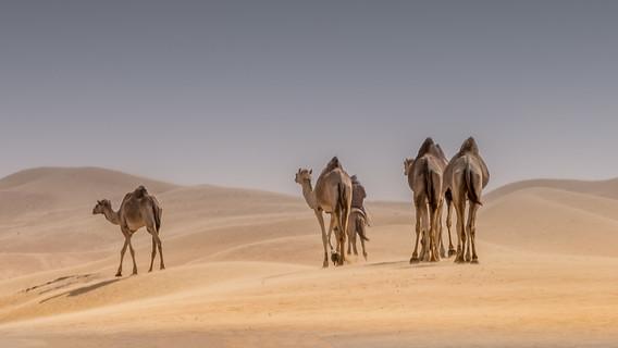 camels 4 behind-1.jpg