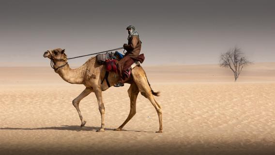 camels-6.jpg