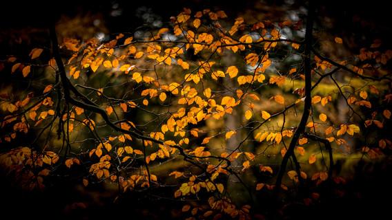 bladeren-1.jpg
