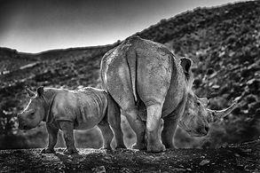 rhino with mom-2.jpg
