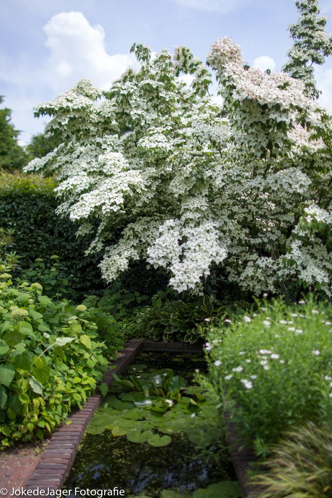 Mijn 100 beste, meest gebruikte witbloeiende planten voor de border