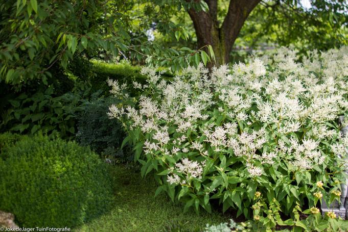 Mijn 100 beste, meest gebruikte wit-bloeiende planten voor de border