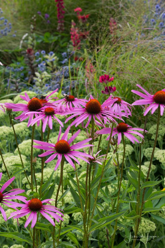Mijn 100 meest gebruikte roze bloeiende planten