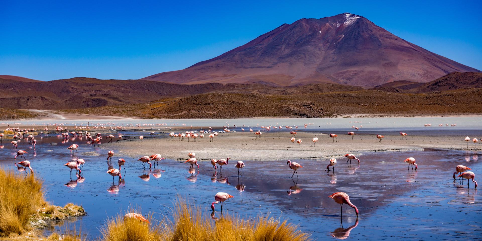 flamingo's 3-3.jpg