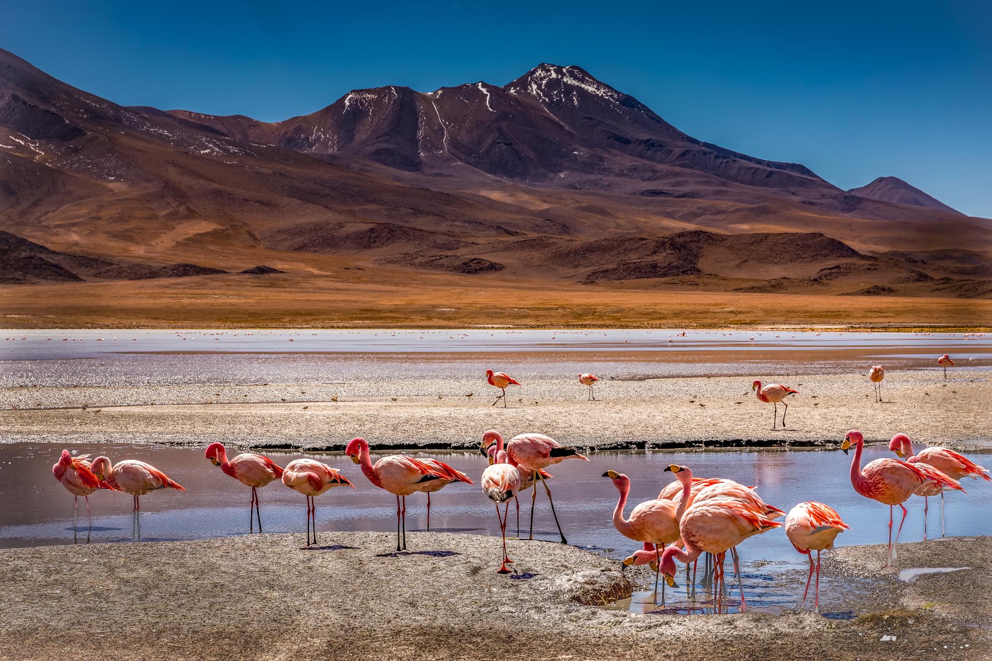 flamingo's 3-2