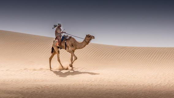 camels-5.jpg