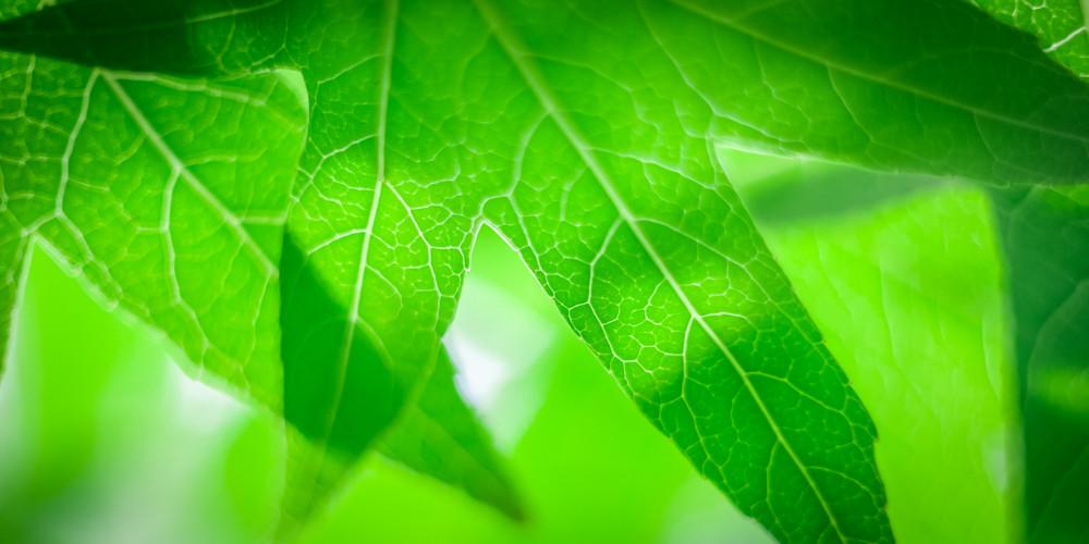 greenleaves-2.jpg
