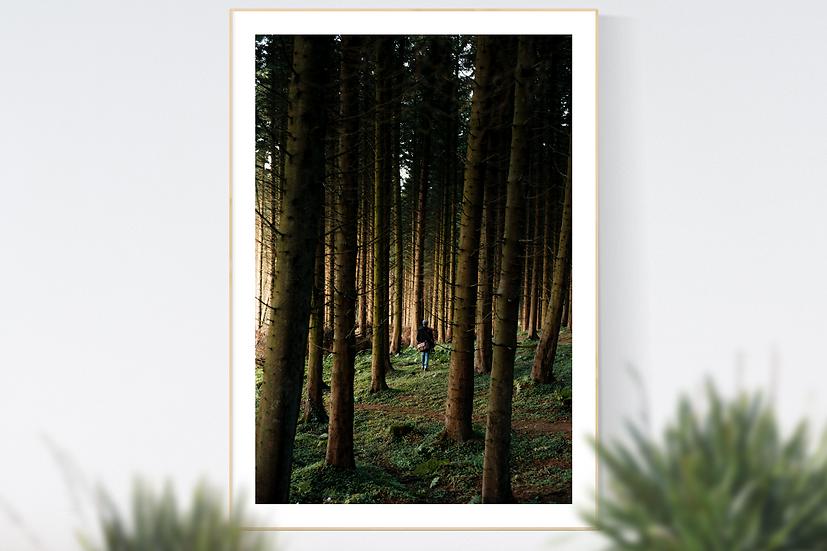 Cairn Wood, Northern Ireland