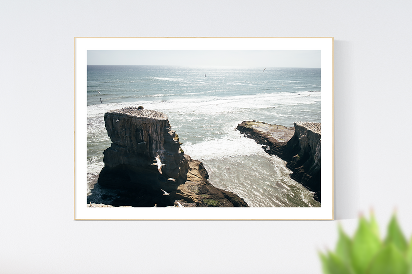 Muriwai Beach, New Zealand