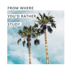 OUA Instagram - Palm Trees