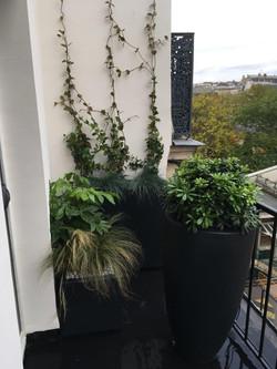 balcon de ville